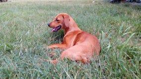 Hundkapplöpning Lufe Royaltyfria Bilder