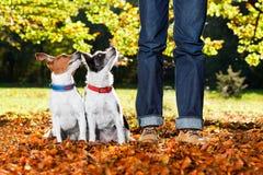 Hundkapplöpning och ägare arkivbild