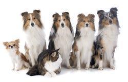 Hundkapplöpning och katt arkivbilder