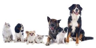 Hundkapplöpning och katter Royaltyfri Bild