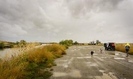 Hundkapplöpning och lastbil på en lerig grusväg Fotografering för Bildbyråer