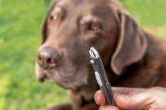 Hundkapplöpning och medicinsk helpefästing royaltyfri foto