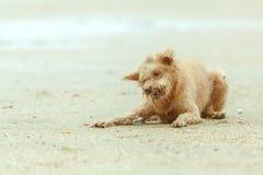 Hundkapplöpning och små krabbor Royaltyfri Fotografi