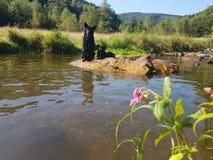 Hundkapplöpning och vatten Royaltyfria Bilder