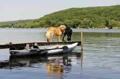 Två hundkapplöpning på skeppsdockan royaltyfri fotografi