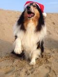 Hundkapplöpning som bär Xmas-hattar Royaltyfri Foto