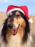 Hundkapplöpning som bär Xmas-hattar Arkivbilder