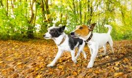 Hundkapplöpning som kör eller går i höst royaltyfri fotografi
