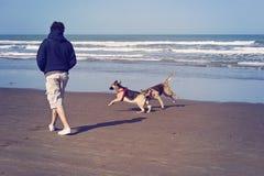 Hundkapplöpning som spelar i stranden royaltyfria foton