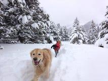 Hundkapplöpning som tycker om snön Arkivfoto