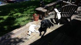 Hundkapplöpning som tycker om solen Royaltyfri Fotografi