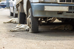Hundkapplöpning som vilar under en gammal bil med plana gummihjul Royaltyfri Bild