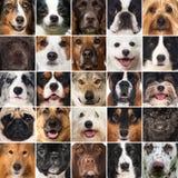 Hundkapplöpningcollage fotografering för bildbyråer
