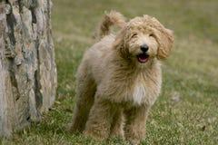 Hundkapplöpningdag Arkivbilder