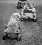 Hundkapplöpningen önskar precis att ha gyckel Arkivfoto