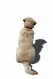 Hundkapplöpningen drar tillbaka Royaltyfri Bild
