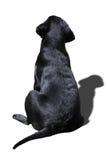 Hundkapplöpningen drar tillbaka Royaltyfri Foto