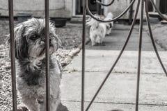 Hundkapplöpningen känner sig ledsen Arkivfoto