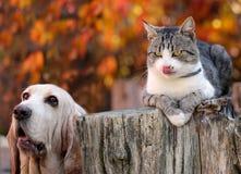 Hundkapplöpningen och kattungar är hungriga Royaltyfri Fotografi