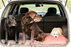 Hundkapplöpningen sitter i baksidan av bilen och väntar på deras ägare fotografering för bildbyråer