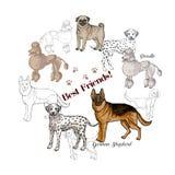 Hundkapplöpningen skissar bakgrund Hundkapplöpning av olika avel stock illustrationer