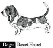 Hundkapplöpningen skissar stil Basset Hound Arkivfoton