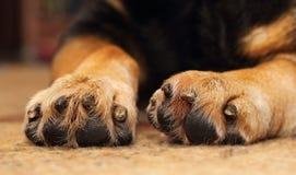 Hundkapplöpningen tafsar Royaltyfri Foto