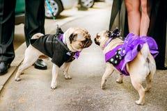 Hundkapplöpningförälskelse Royaltyfria Bilder