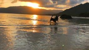 Hundkapplöpninglekar på stranden Hundkapplöpning som spelar, och plaskande vatten på havet lager videofilmer