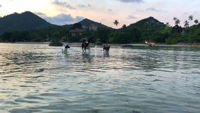 Hundkapplöpninglekar på stranden Hundkapplöpning som spelar, och plaskande vatten på havet stock video