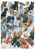 Hundkapplöpningmontage Arkivfoton