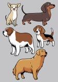 Hundkapplöpningsamlingsdel 2 Arkivbild