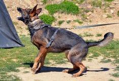 Hundkapplöpning 133 Royaltyfri Bild