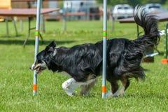 Hundkapplöpningshow Royaltyfria Foton