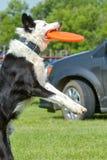 Hundkapplöpningshow Arkivbild