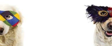 HUNDKARNEVAL ELLER FJÄDERMASKERING FÖR MARDI GRAS DEN ROLIGA LABRADOREN MED A PUTSAR EYEMASK ISOLERAT SKOTT MOT VIT BAKGRUND arkivbild