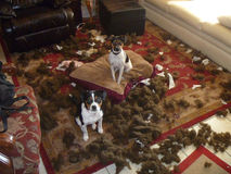 Hundkatastrof Fotografering för Bildbyråer
