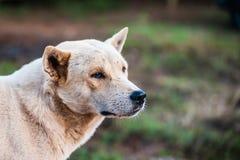 Hundklocka Fotografering för Bildbyråer