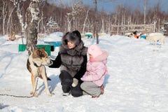 Hundkoja Fotografering för Bildbyråer