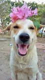 Hundleende Royaltyfri Fotografi