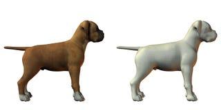 hundmodell för boxare 3d royaltyfri illustrationer