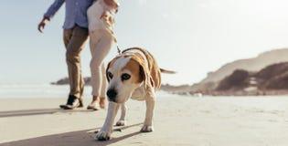 Hundmorgonen går på stranden med ägaren arkivbild