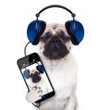 Hundmusik arkivbild
