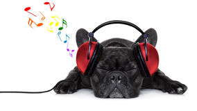 Hundmusik Arkivbilder