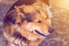Hundnärbilden ligger på jordningen royaltyfri fotografi