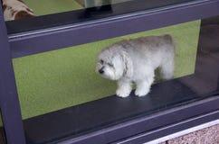 Hundomsorgmitt Fotografering för Bildbyråer