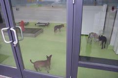 Hundomsorgmitt Royaltyfria Bilder