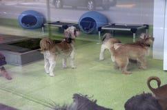 Hundomsorgmitt Royaltyfri Bild