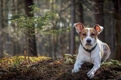 Hundportret i skog royaltyfri fotografi