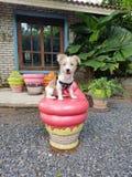 Hundpudding Royaltyfria Bilder
